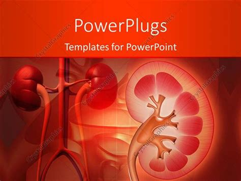powerpoint template medical theme with kidney and other