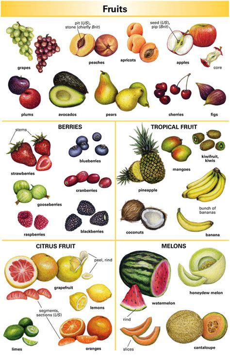 fruit dictionary fruit definition for language learners from