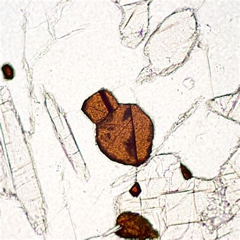 rutile thin section some of metamorphic minerals under microscope picture
