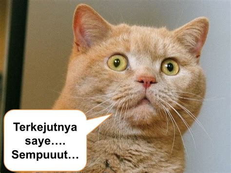 wallpaper kartun kucing lucu 10 gambar kucing lucu syurga itu indah