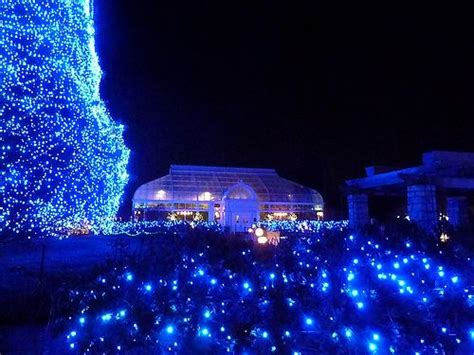 17 best images about lights before christmas on pinterest