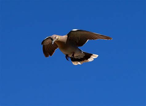 dive dove dived dove diving