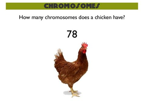 how many chromosomes does a sexual reproduction meiosis