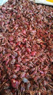 Bawang Dayak Asli Dari Kalimantan jual bawang dayak sidoarjo distributor bawang dayak asli