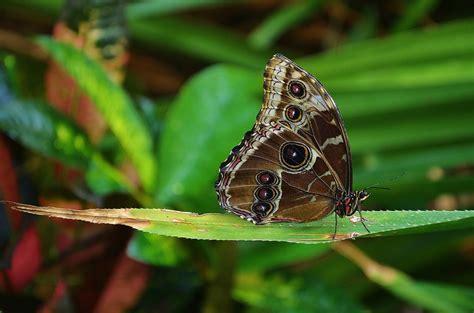 imagenes sobre mariposas color de mariposa