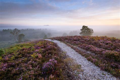 www new new forest hshire stu meech