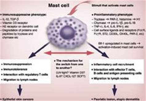 mast cell tumor symptoms cell mast disorders on disorders cells activity and factors