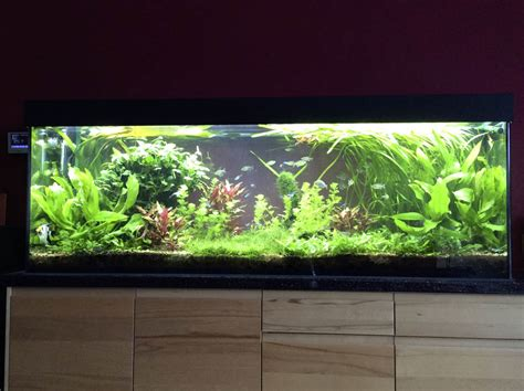 aquarium led beleuchtung erfahrung mitras lightbar ghl deutschland