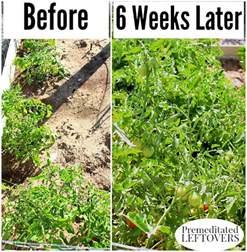 What To Plant In Summer Vegetable Garden - tips for fertilizing your vegetable garden