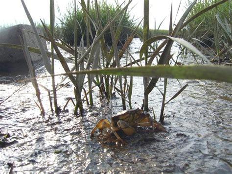 wann ist ebbe und flut das wattenmeer k 252 stenheide wernerwald finkenmoor