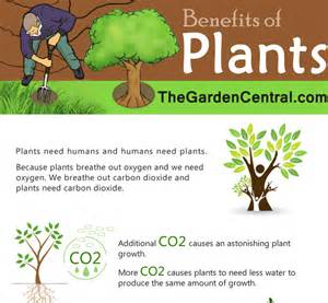 Benefits Of Houseplants by Plant Benefits Images