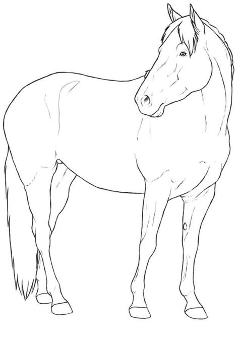 horse templates for photoshop kids n fun com 30 coloring pages of horse breeds