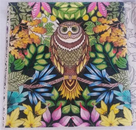secret garden coloring book owl owl secret garden coruja jardim secreto johanna basford