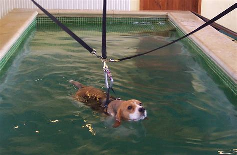hydrotherapy for dogs canine hydrotherapy