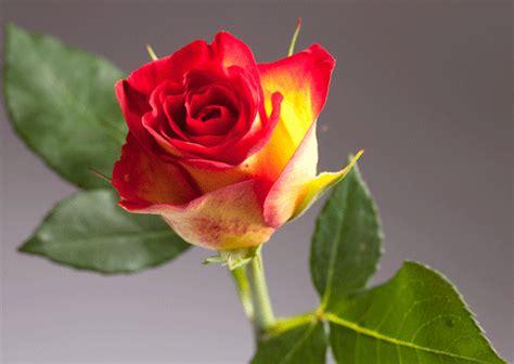 imagenes de flores 3d en uñas imagenes flores en 3d imagui