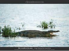 Kruger Wildlife Photos – Images & Pictures of Kruger ... 134d