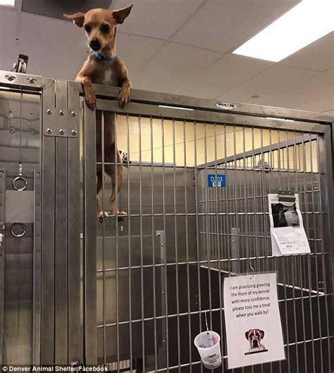 denver pound denver animal shelter home autos post