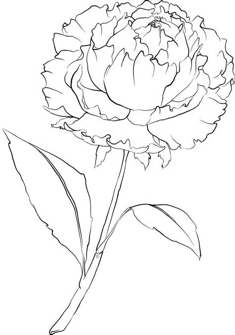peoni pattern font free free coloring pages of peonies
