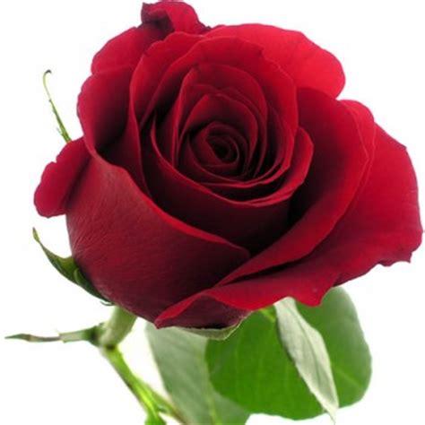 floreros para una flor definici 243 n de flor qu 233 es y concepto