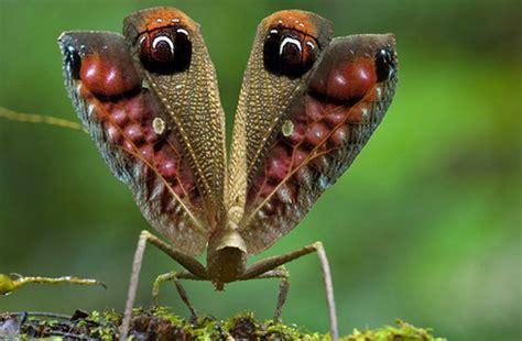 imagenes de animales endemicos en fotos animales raros cubadebate