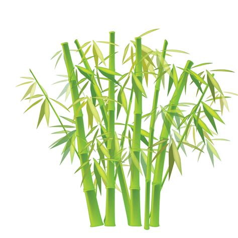 pohon bambu belajardoa