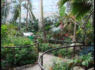 Uf Butterfly Garden by Butterfly Rainforest Gainesville Florida