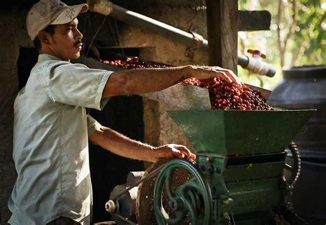Costa Rica Coffee Tours!   Hacienda Pinilla