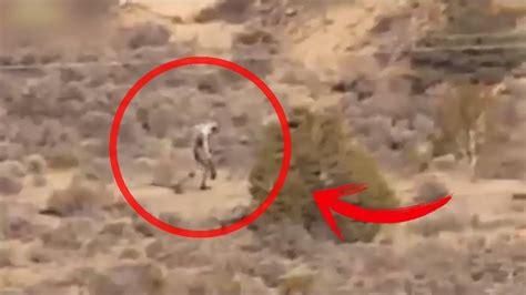 imagenes reales de la vida 7 chupacabras reales captados en c 225 mara youtube