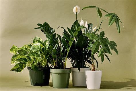 indoor plants   kind  person gear
