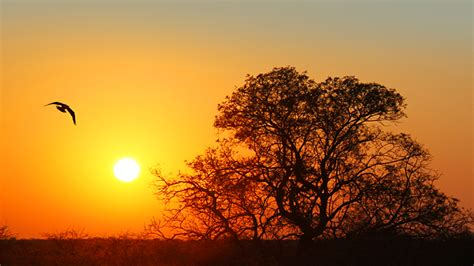 mal d africa testo zambia the real africa juzaphoto