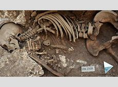 The Thousand-Year Graveyard | Science | AAAS Joyce Vincent Body