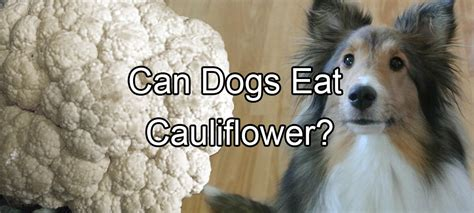 can dogs eat potatoes food pethority dogs