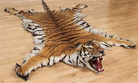 Bengal Tiger Rug a bengal tiger rug complete with