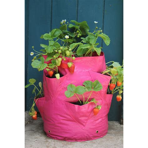 Strawberry Planters Uk by Strawberry And Herb Patio Planter Haxnicks