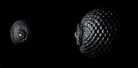 gambar alam kreatif hitam  putih buah benih