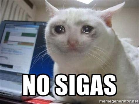 imagenes de gatitos llorando im 225 genes de tiernos gatitos tristes