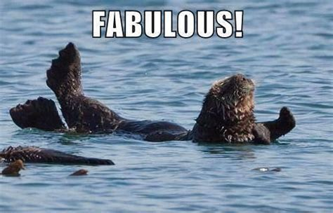 Bitch Im Fabulous Meme - otterly fabulous bitch i m fabulous know your meme