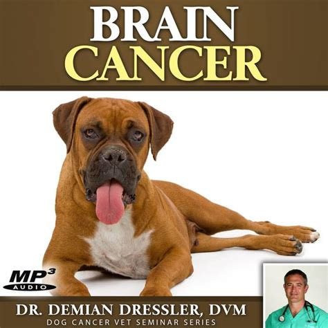 brain tumors in dogs cancer survival store resources from trusted veterinary experts
