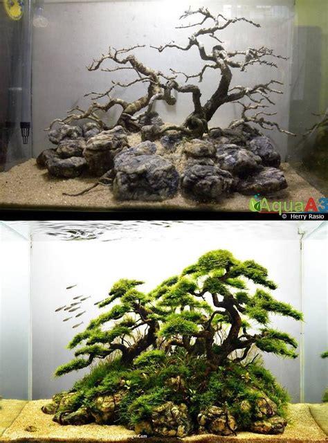 simons aquascape blog evolution rank  iaplc