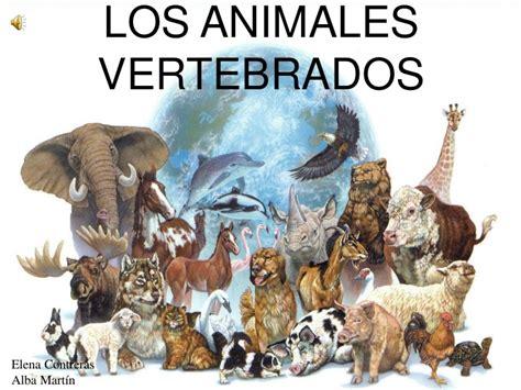 imagenes de animales vertebrados wikipedia los animales vertebrados