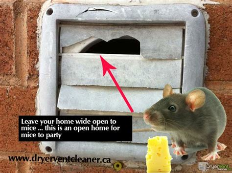 how to keep mice out of your house how to keep mice out of house keeping mice out of your dryer vent with a pest proof
