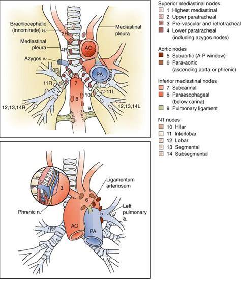 grupos ganglionares toracicos o cancer de pulm 195 o