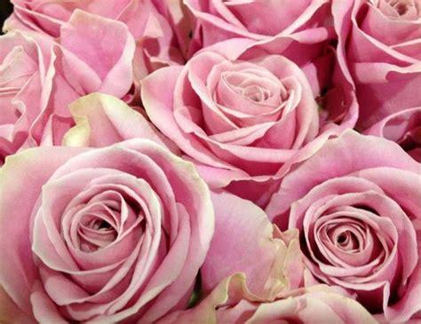 fiori lilla per matrimonio fiori lilla per matrimonio best sta with fiori lilla