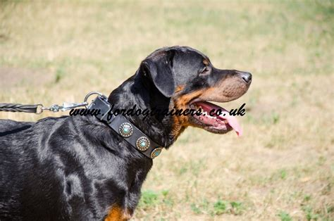 collars for rottweilers leather collar for rottweiler rottweiler collars fashion