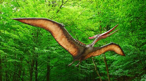 Picture Of A by File Pteranodon Dinopark Ko紂 Jpg Wikimedia Commons