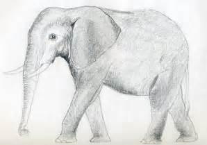 How to draw an elephant jus 4 kidz