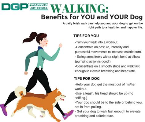 benefits of dogs walking benefits for you and your dgp for pets