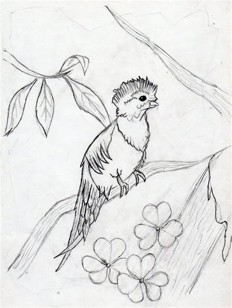 quetzal bird coloring page images
