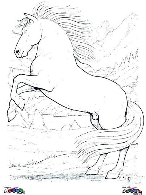 Coloring Of Horses by Coloring Sheets Of Horses And Foal Coloring Pages