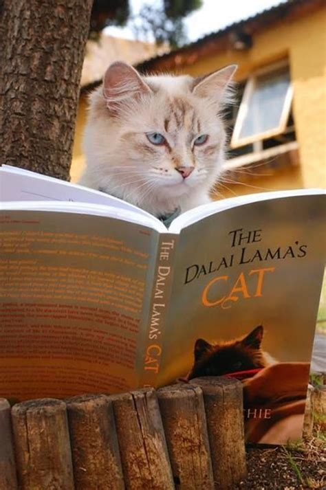 1401943276 the dalai lama s cat and 822 best images about chats chatons cats kittens on